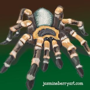 temp spider
